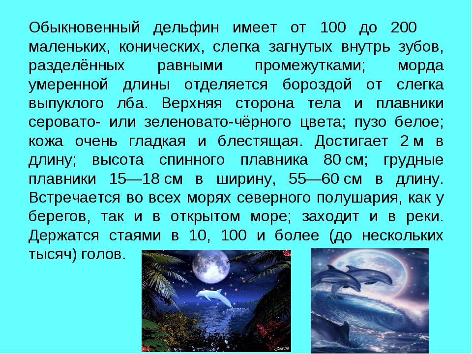 Обыкновенный дельфин имеет от 100 до 200 маленьких, конических, слегка загнут...
