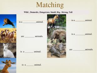 Matching Wild , Domestic, Dangerous, Small, Big , Strong, Tall is a _________