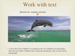 Look at this lovely dolphin! It is jumping in the sea. Dolphins can jump hig