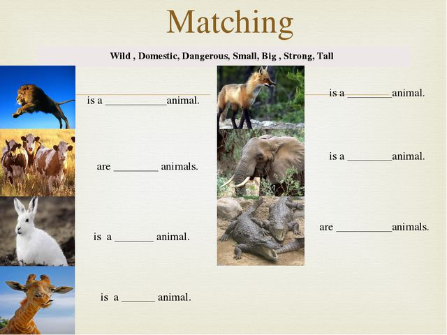 Matching Wild , Domestic, Dangerous, Small, Big , Strong, Tall is a _________...