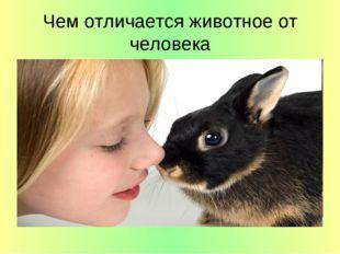 Чем отличается животное от человека