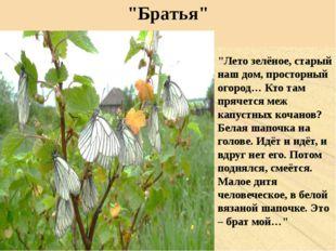 """""""Братья"""" """"Лето зелёное, старый наш дом, просторный огород… Кто там прячется м"""