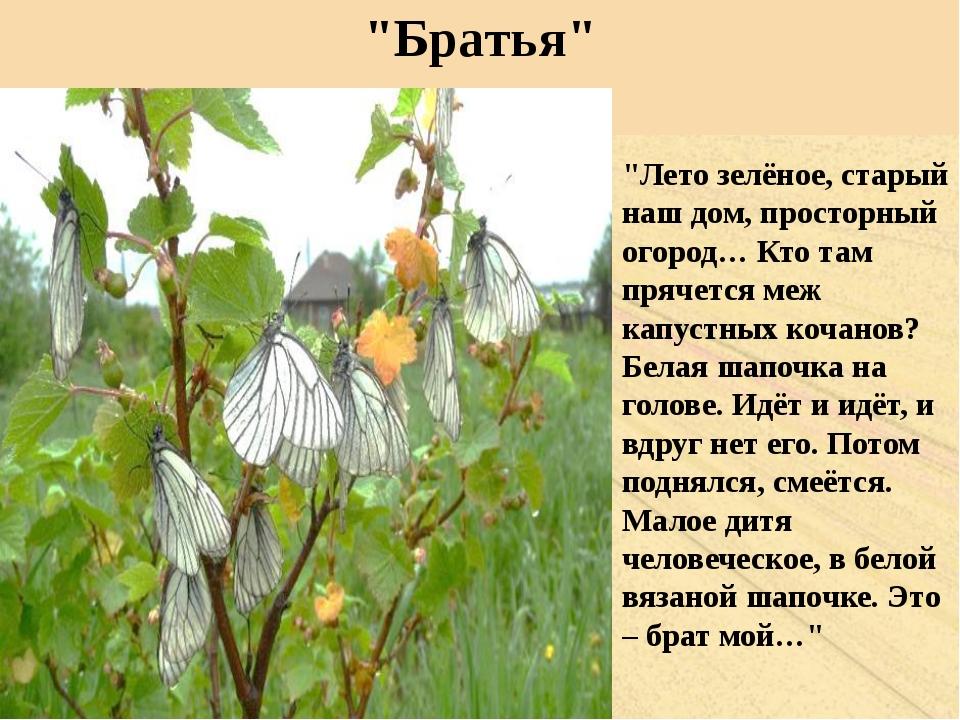 """""""Братья"""" """"Лето зелёное, старый наш дом, просторный огород… Кто там прячется м..."""