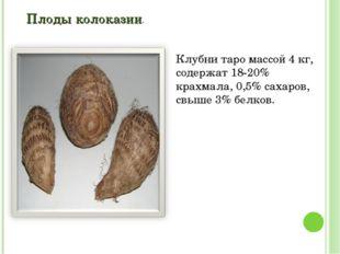 Плоды колоказии. Клубни таро массой 4 кг, содержат 18-20% крахмала, 0,5% саха