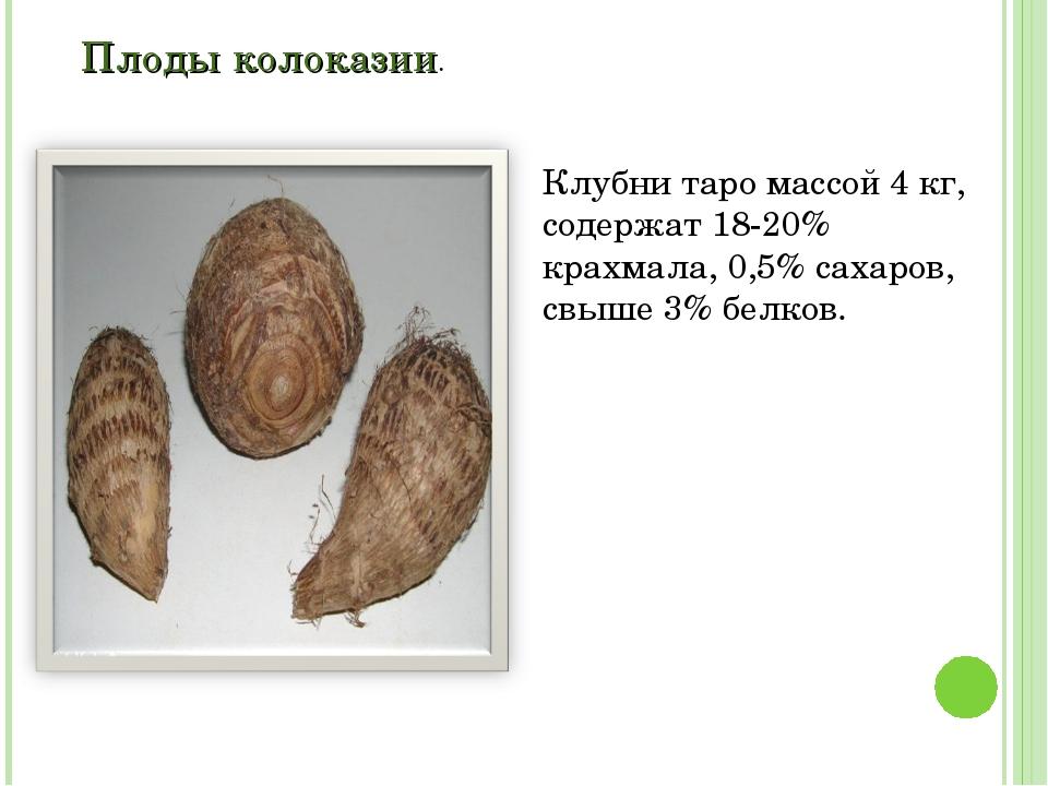 Плоды колоказии. Клубни таро массой 4 кг, содержат 18-20% крахмала, 0,5% саха...