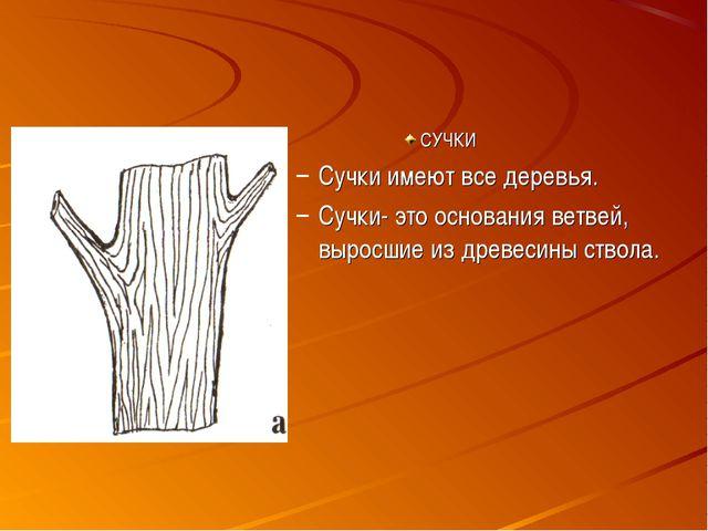 СУЧКИ Сучки имеют все деревья. Сучки- это основания ветвей, выросшие из древе...