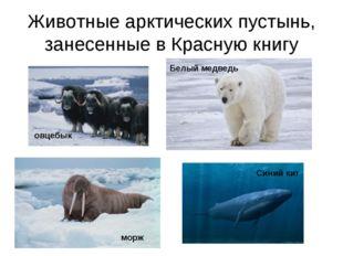 Животные арктических пустынь, занесенные в Красную книгу овцебык морж Белый м