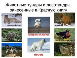 Животные тундры и лесотундры, занесенные в Красную книгу снежный барс красный