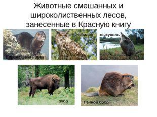 Животные смешанных и широколиственных лесов, занесенные в Красную книгу Европ