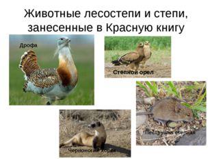 Животные лесостепи и степи, занесенные в Красную книгу Степной орел Дрофа Чер