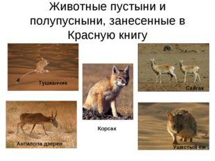 Животные пустыни и полупусныни, занесенные в Красную книгу Корсак Тушканчик А