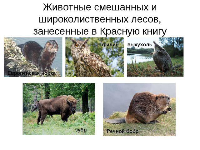 Животные смешанных и широколиственных лесов, занесенные в Красную книгу Европ...