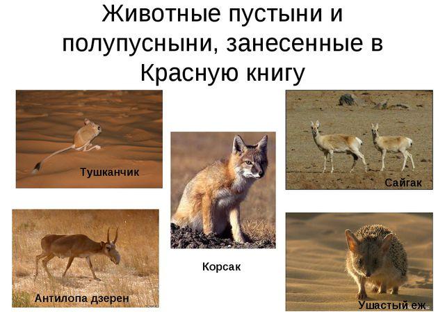 Животные пустыни и полупусныни, занесенные в Красную книгу Корсак Тушканчик А...