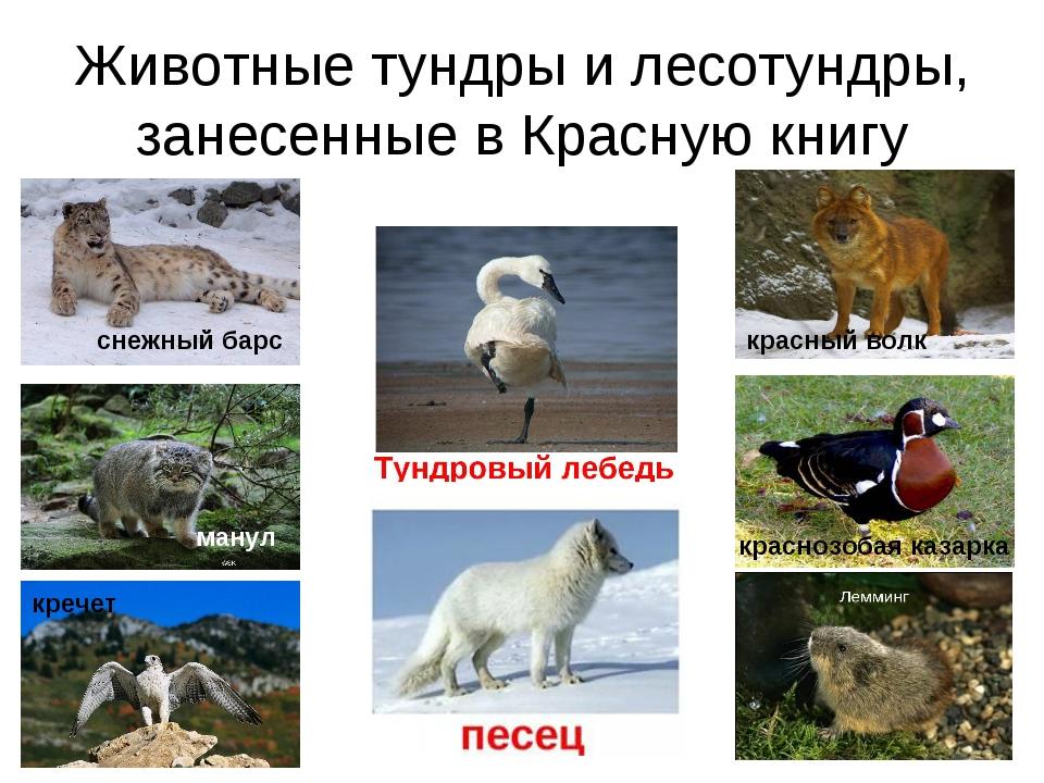 Виды грибов занесенные в Красную книгу России