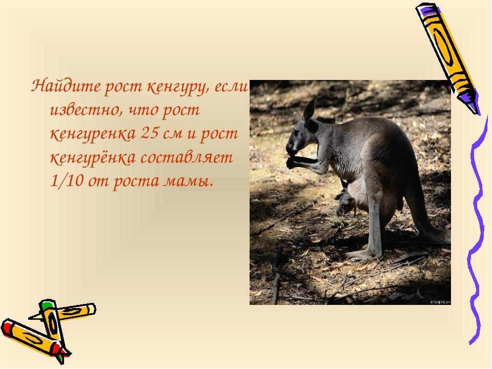 Найдите рост кенгуру, если известно, что рост кенгуренка 25 см и рост кенгурё...