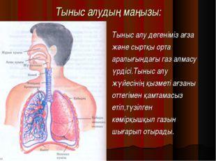 Тыныс алудың маңызы: Тыныс алу дегеніміз ағза және сыртқы орта аралығындағы г
