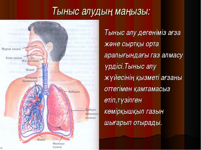Тыныс алудың маңызы: Тыныс алу дегеніміз ағза және сыртқы орта аралығындағы г...