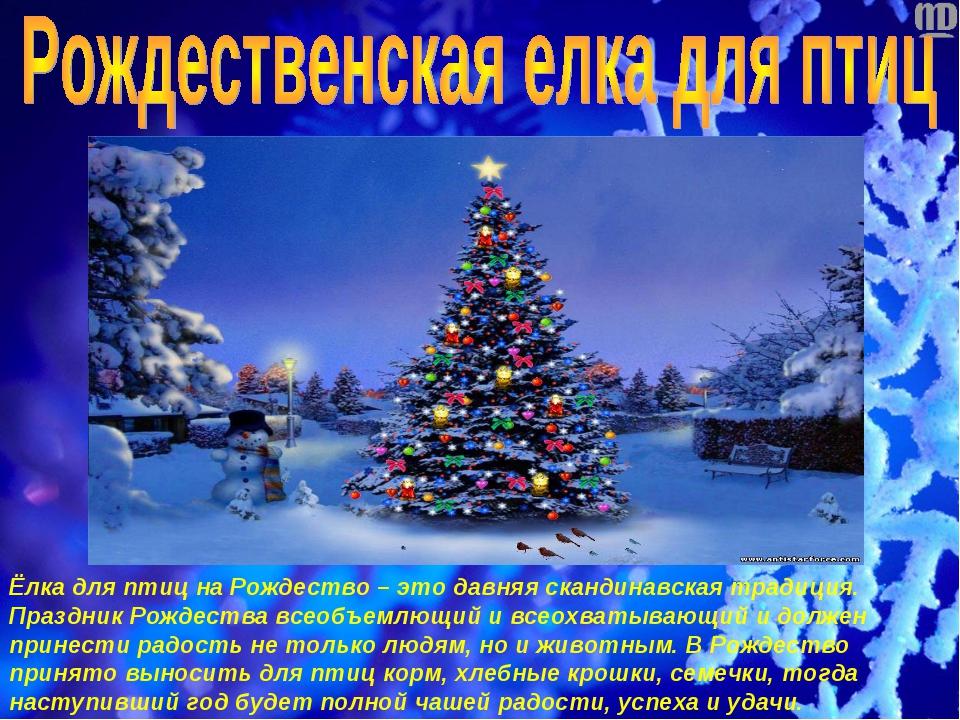 Ёлка для птиц на Рождество – это давняя скандинавская традиция. Праздник Рожд...