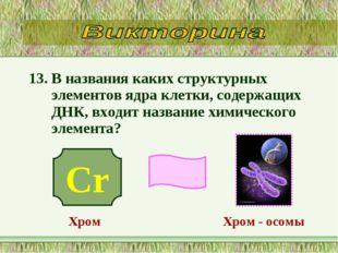 13. В названия каких структурных элементов ядра клетки, содержащих ДНК, входи