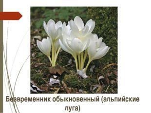 Безвременник обыкновенный (альпийские луга) http://www.green-portal.ru/custom