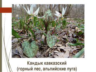 Кандык кавказский (горный лес, альпийские луга) http://molbiol.ru/forums/uplo