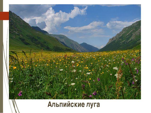 Альпийские луга http://photos.lifeisphoto.ru/12/0/121549.jpg