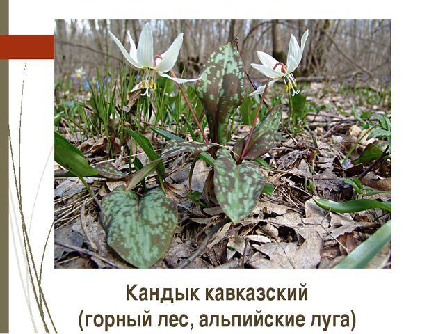 Кандык кавказский (горный лес, альпийские луга) http://molbiol.ru/forums/uplo...