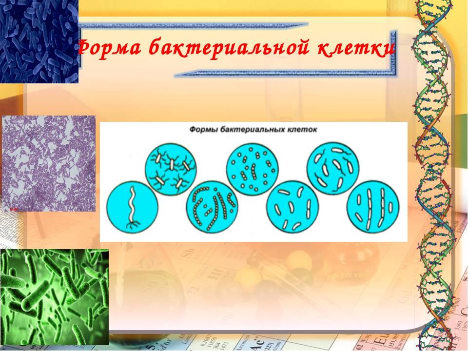 Форма бактериальной клетки