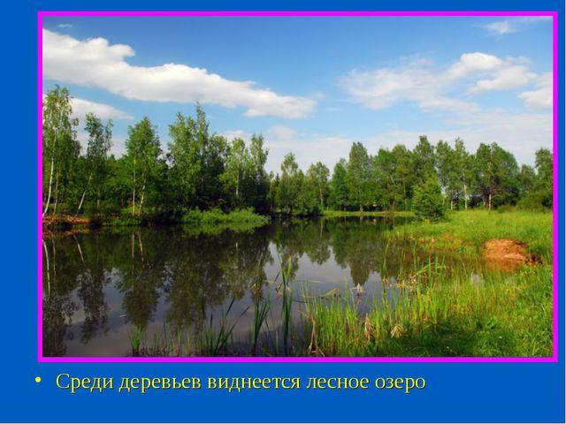 Среди деревьев виднеется лесное озеро