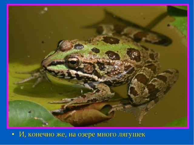 И, конечно же, на озере много лягушек