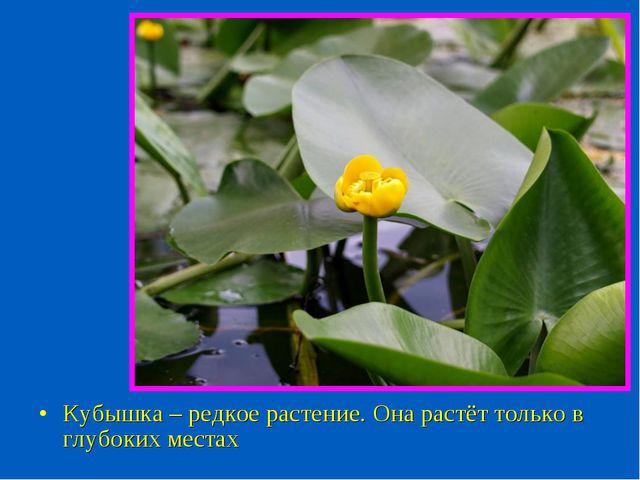 Кубышка – редкое растение. Она растёт только в глубоких местах