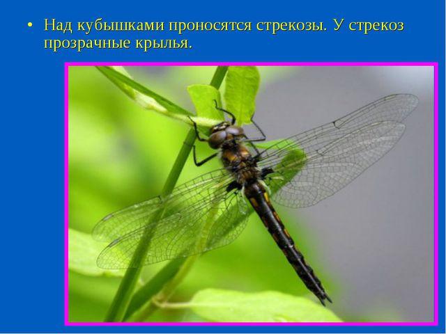 Над кубышками проносятся стрекозы. У стрекоз прозрачные крылья.