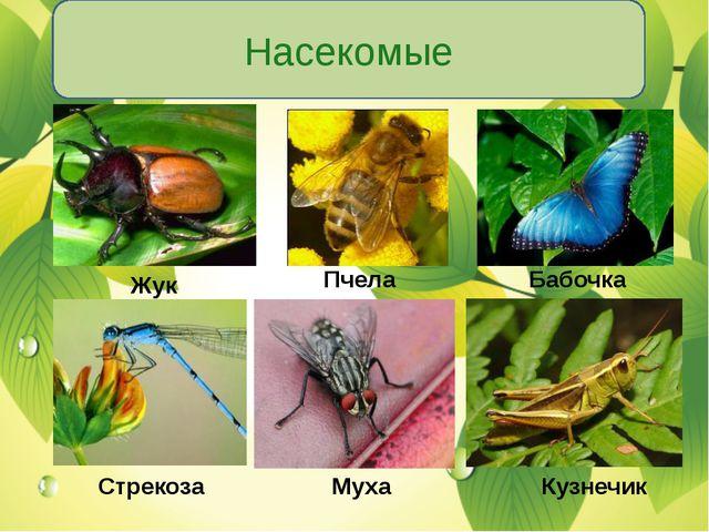 Насекомые Жук Пчела Бабочка Стрекоза Муха Кузнечик