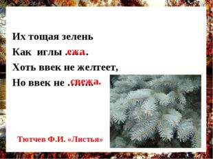 Их тощая зелень Как иглы ……. Хоть ввек не желтеет, Но ввек не …….. ежа свежа.