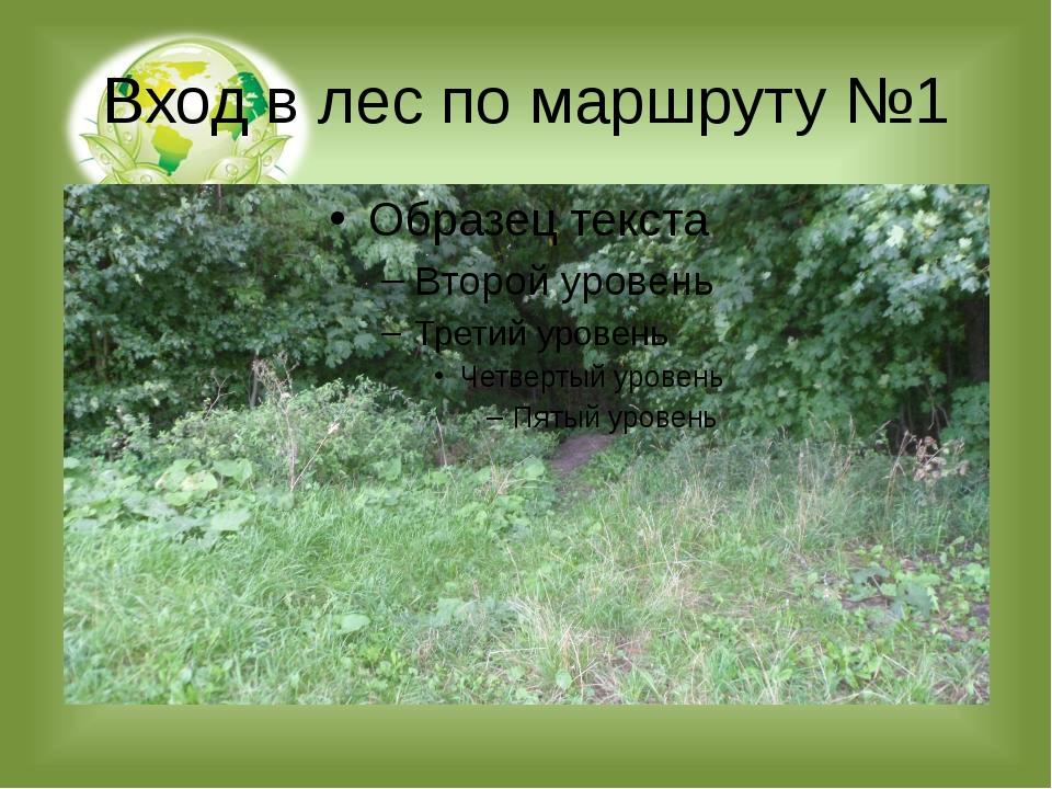 Вход в лес по маршруту №1