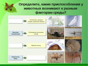 Определите, какие приспособления у животных возникают к разным факторам среды?