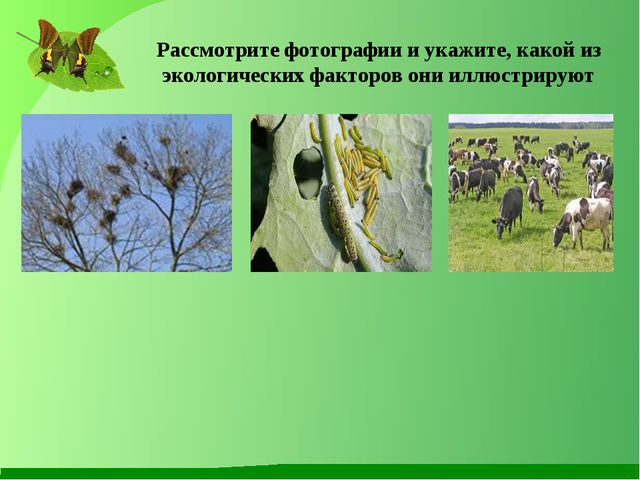 Рассмотрите фотографии и укажите, какой из экологических факторов они иллюстр...