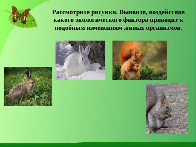 Рассмотрите рисунки. Выявите, воздействие какого экологического фактора приво...