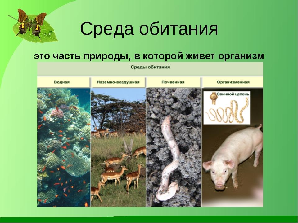 Среда обитания это часть природы, в которой живет организм