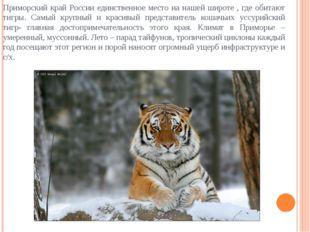 Приморский край России единственное место на нашей широте , где обитают тигры