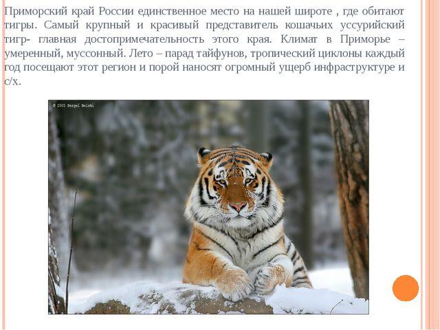 Приморский край России единственное место на нашей широте , где обитают тигры...