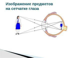Изображение предметов на сетчатке глаза