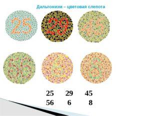 29 45 56 6 8 Дальтонизм – цветовая слепота
