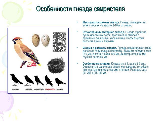 Особенности гнезда свиристеля Месторасположение гнезда. Гнездо помещает на ел...