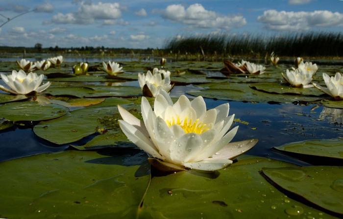 http://img1.liveinternet.ru/images/attach/c/4/78/631/78631207_20.jpg