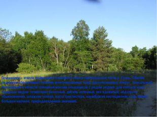 Ольшаники – эталон пойменного ольхового леса в притеррасной части р. Елань. О