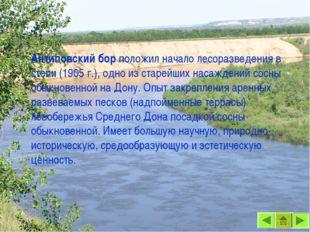 Антиповский бор положил начало лесоразведения в степи (1905 г.), одно из стар