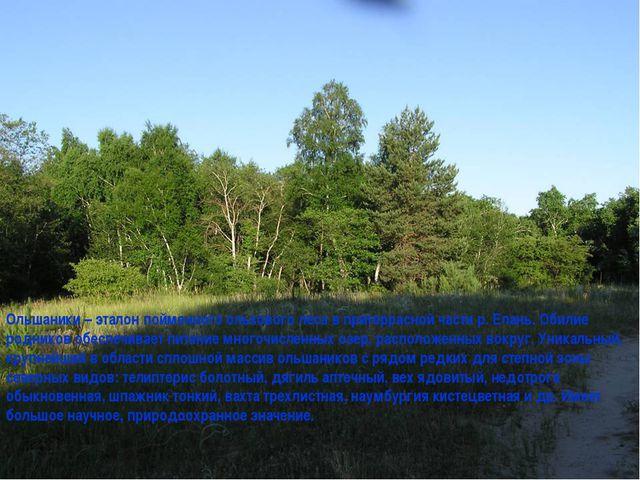 Ольшаники – эталон пойменного ольхового леса в притеррасной части р. Елань. О...