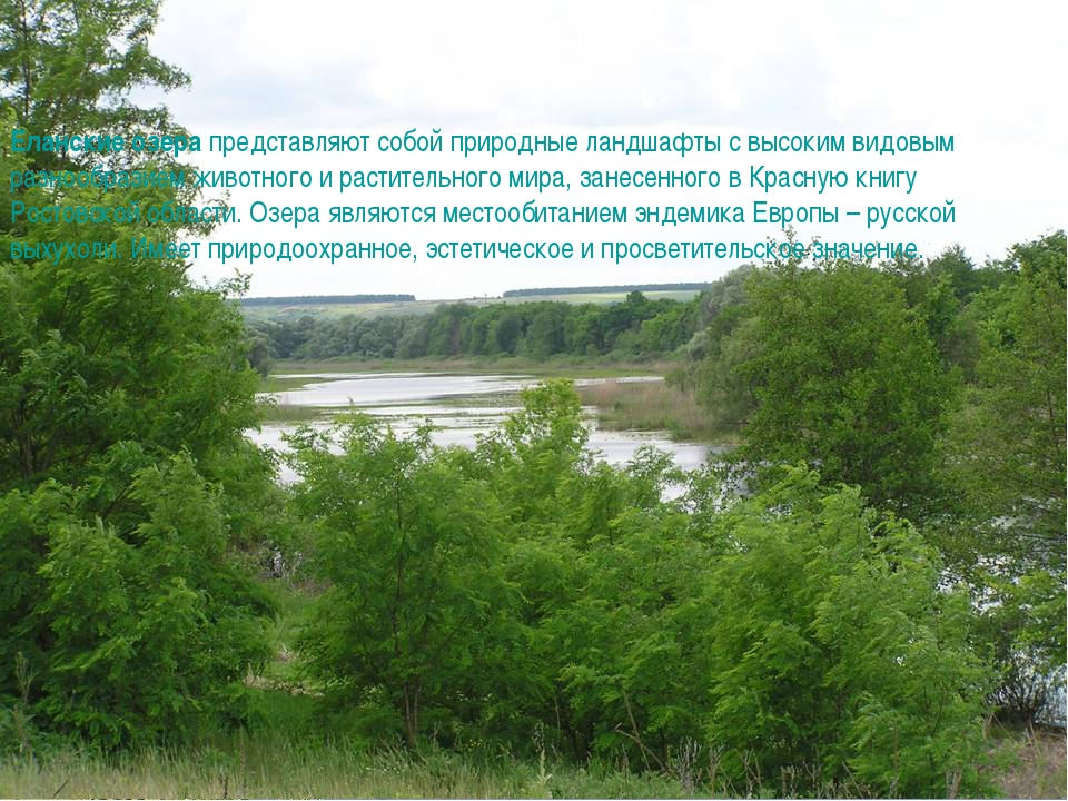 Еланские озера представляют собой природные ландшафты с высоким видовым разно...