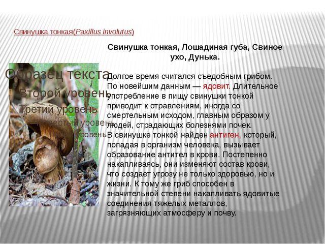 Свинушка тонкая (Paxillus involutus) Свинушка тонкая, Лошадиная губа, Свиное...